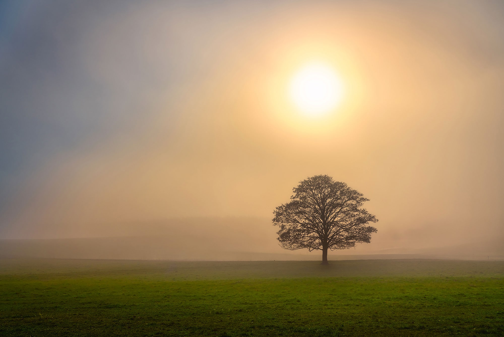 michael schaake sony alpha 7RIII solitary tree in a serene landscape with a misty sun behind