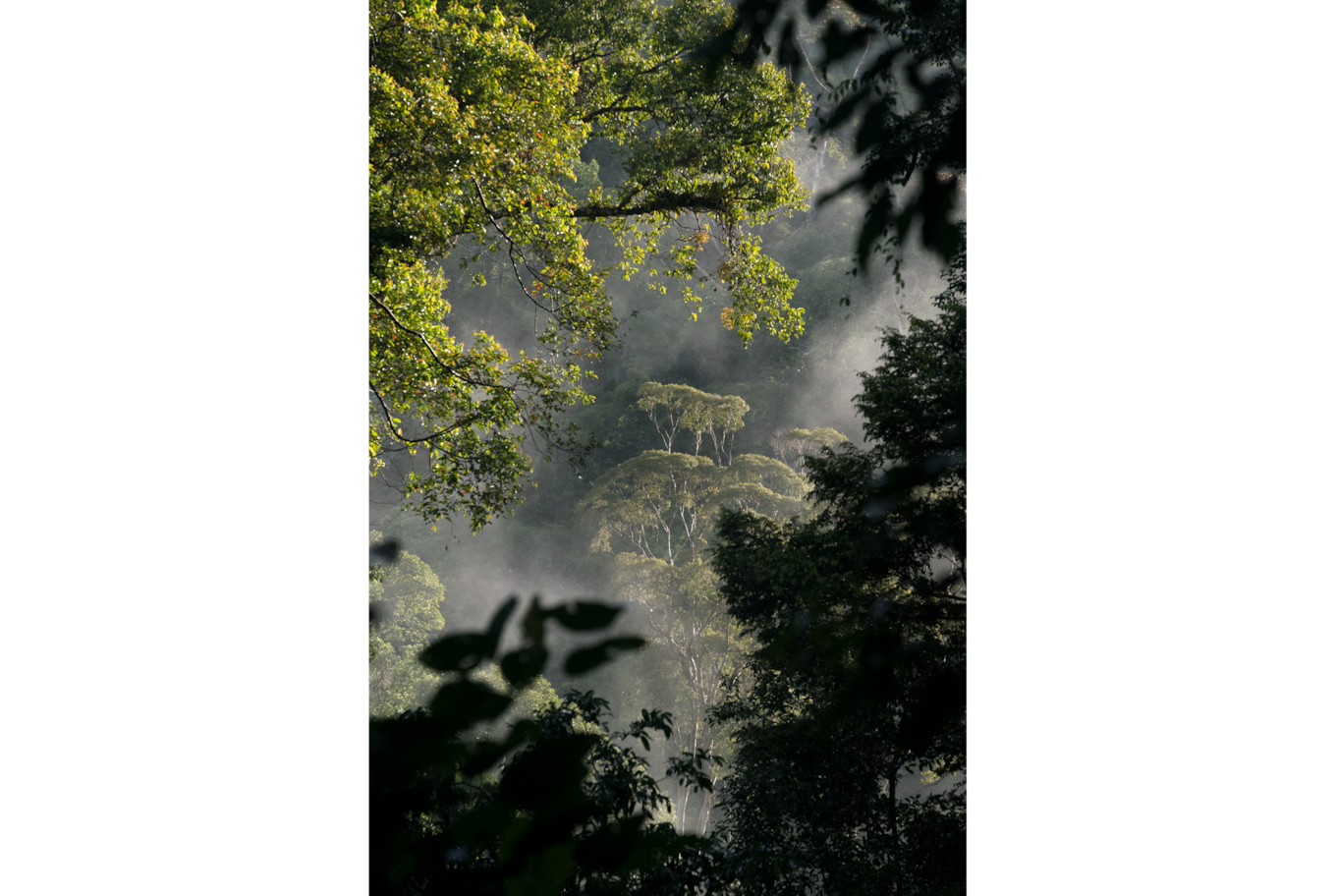 Tomas Wuethrich sony alpha 9 jungle mists weaving through trees lit with dappled sunlight