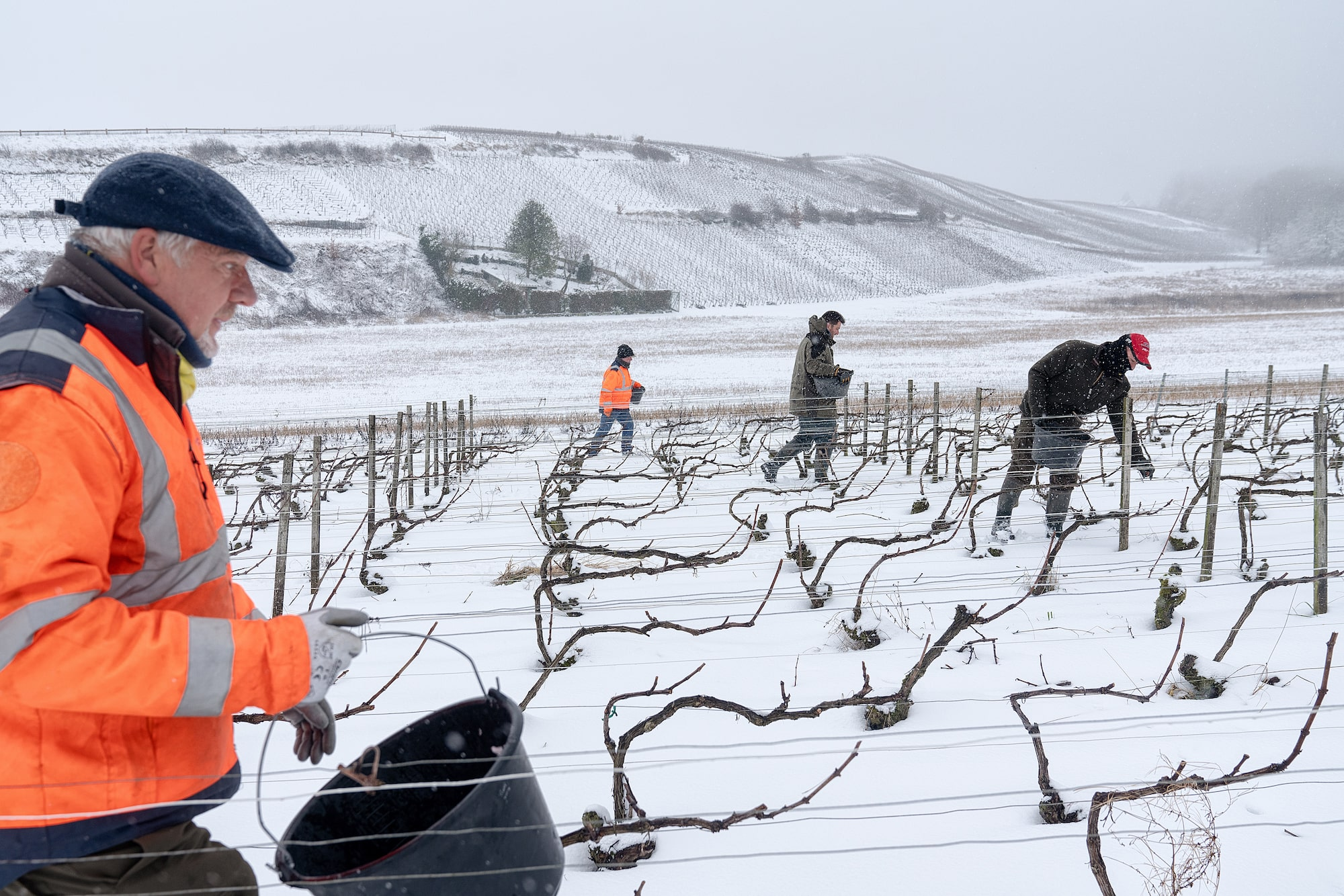 justin jin sony apha 7r3 four men working in a grape field under the snow