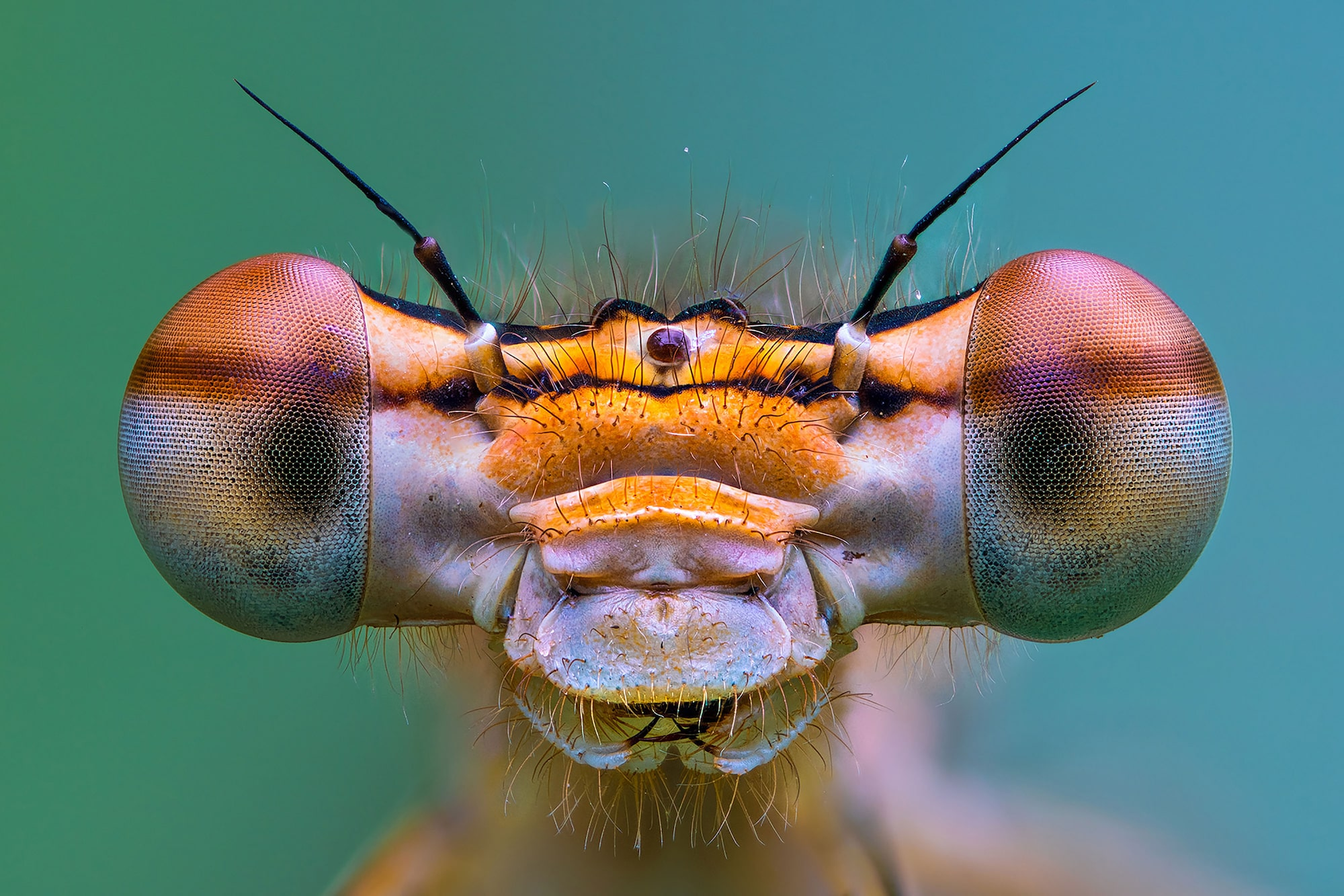 petar sabol sony alpha 7RIII extreme close up of an insect face