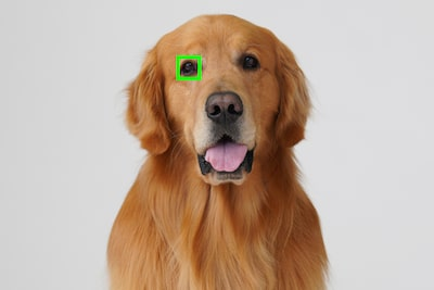 Animal-eye AF feature now available with software update