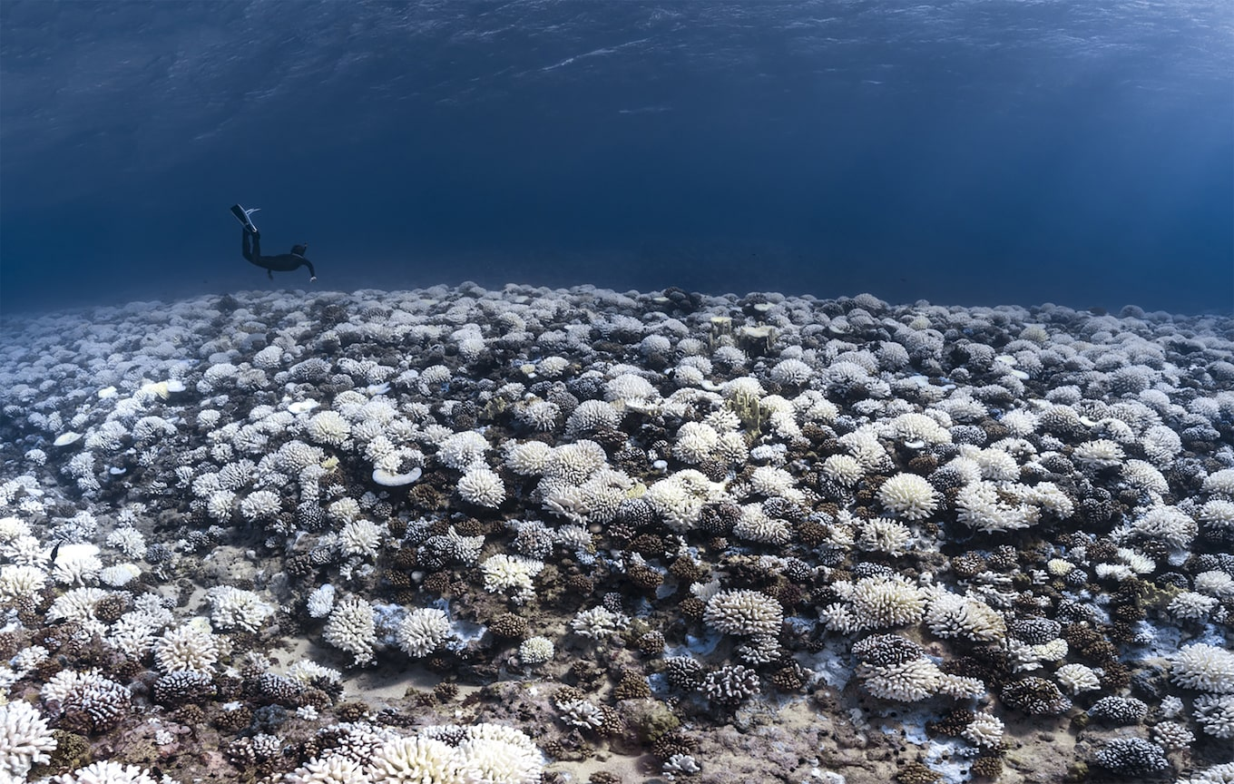 alexis rosenfeld sony alpha 7r2 seabed covered with corals